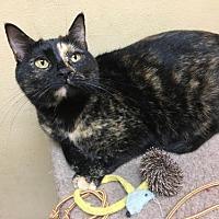 Adopt A Pet :: Eva - Capshaw, AL