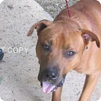 Adopt A Pet :: Dante - Rocky Mount, NC