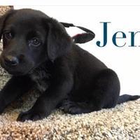 Adopt A Pet :: Jem - Olathe, KS