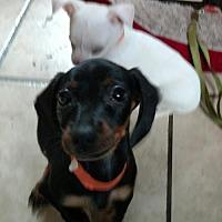 Adopt A Pet :: TUFF -deformed front leg - WOODSFIELD, OH