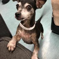 Adopt A Pet :: Minerva - San Francisco, CA