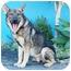 Photo 3 - German Shepherd Dog Dog for adoption in Los Angeles, California - Atlas von Augsburg