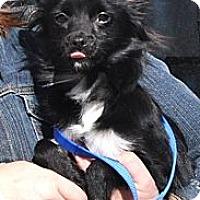 Adopt A Pet :: Ellie - Peru, IN