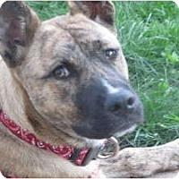 Adopt A Pet :: Ally Kazam - Warren, NJ