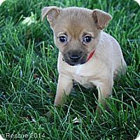 Adopt A Pet :: Betty - Broomfield, CO