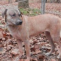 Adopt A Pet :: Duckie - Capon Bridge, WV