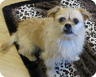 Pekingese/Chihuahua Mix Dog for adoption in High Point, North Carolina - Mario