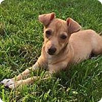 Adopt A Pet :: Jasmine - Marlton, NJ