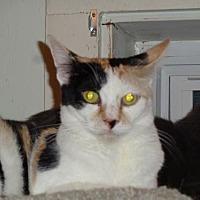 Adopt A Pet :: Daffodil - Watsontown, PA