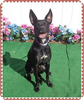 Retriever (Unknown Type) Mix Dog for adoption in Marietta, Georgia - BAMBI