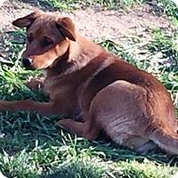 Adopt A Pet :: Elsie - Rancho Cucamonga, CA