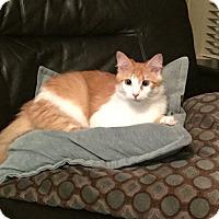 Adopt A Pet :: Olivia - Cerritos, CA
