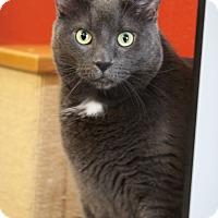 Adopt A Pet :: Ambrose - Sarasota, FL