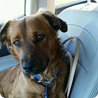 Adopt A Pet :: Yogi - Elyria, OH