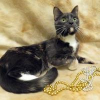 Adopt A Pet :: Irelia - Port Charlotte, FL