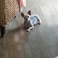 Adopt A Pet :: kyjo - Dothan, AL