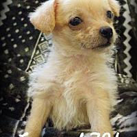 Adopt A Pet :: General TY - Anaheim Hills, CA