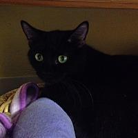 Adopt A Pet :: Posey - Byron Center, MI