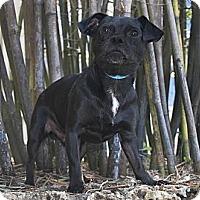 Adopt A Pet :: Solo - North Palm Beach, FL