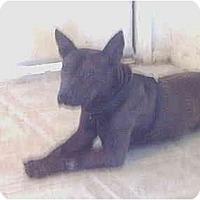 Adopt A Pet :: Mistress - Flint (Serving North and East TX), TX