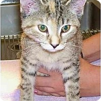 Adopt A Pet :: Peaches - Odenton, MD