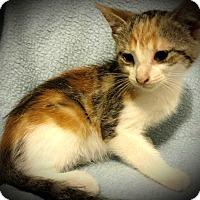 Adopt A Pet :: Kolby - Fairborn, OH