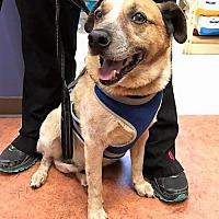 Adopt A Pet :: Alexander - Ellijay, GA
