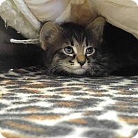 Adopt A Pet :: Bruce - Colonial Heights, VA
