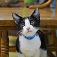 Adopt A Pet :: Pecos - Dallas, TX