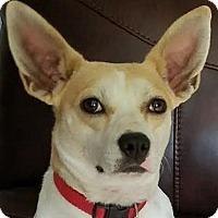 Adopt A Pet :: Savannah - Lexington, KY