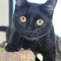 Adopt A Pet :: Alia - Monroe, WI
