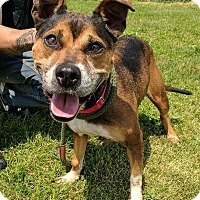 Adopt A Pet :: Sheeba - Lisbon, OH