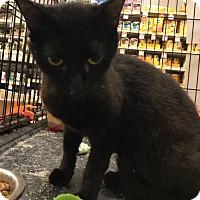 Adopt A Pet :: Sheeba - Sacramento, CA
