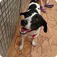 Adopt A Pet :: Meadow - Richmond, BC