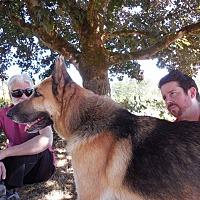 Adopt A Pet :: Sadie - Woodinville, WA