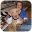 Photo 1 - Weimaraner/Rhodesian Ridgeback Mix Dog for adoption in Fort Worth, Texas - Winnie