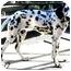 Photo 3 - Dalmatian Puppy for adoption in Mandeville Canyon, California - Smokey