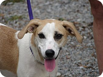 Beagle Mix Dog for adoption in Ocala, Florida - Sunny