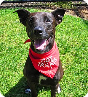 Labrador Retriever Mix Dog for adoption in El Cajon, California - Daisy