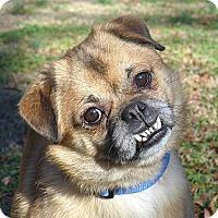 Adopt A Pet :: Ewok - Mocksville, NC
