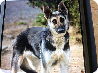 German Shepherd Dog Puppy for adoption in Los Angeles, California - BETH VON BOOTH