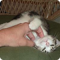 Adopt A Pet :: Phoenix - Stanford, CA