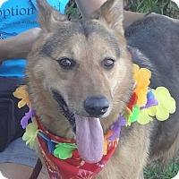 Adopt A Pet :: Tori - Canoga Park, CA
