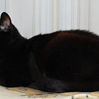 Adopt A Pet :: Francheska - Fullerton, CA