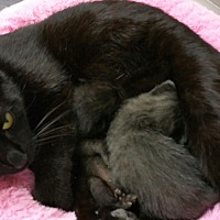 Adopt A Pet :: Luna - Nuevo, CA