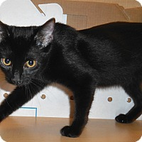 Adopt A Pet :: Shadow - Chattanooga, TN