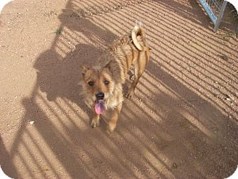 Terrier (Unknown Type, Small) Mix Dog for adoption in Buchanan Dam, Texas - Faunzy