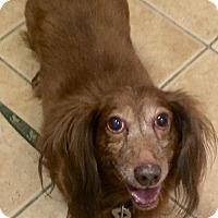 Adopt A Pet :: Kooper - Oak Ridge, NJ