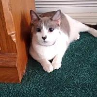 Adopt A Pet :: Koda - Ocala, FL