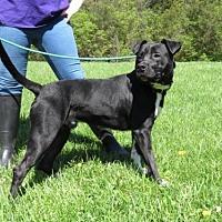 Adopt A Pet :: Max - Batavia, OH
